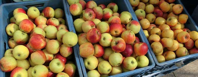 analisi frutta
